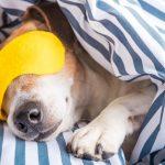 ¿Qué tipo de siesta debes tomar?
