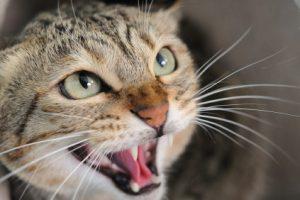 el gato me arañó