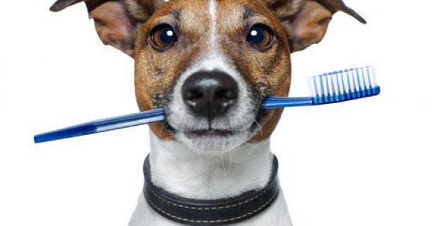 ¿Y tú conoces la importancia de la higiene dental de tu mejor amigo?