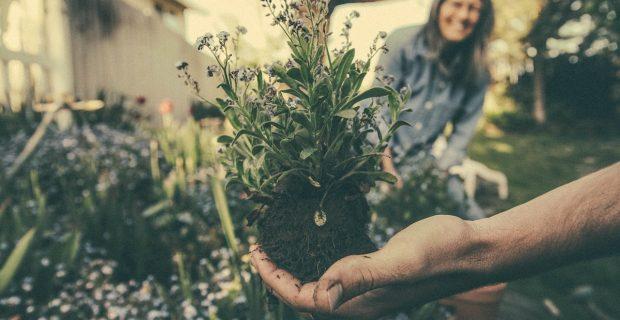 Fertilizantes caseros para tus plantas