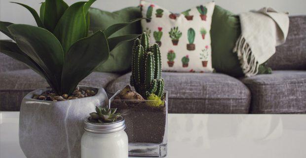 5 plantas para aromatizar naturalmente tu casa
