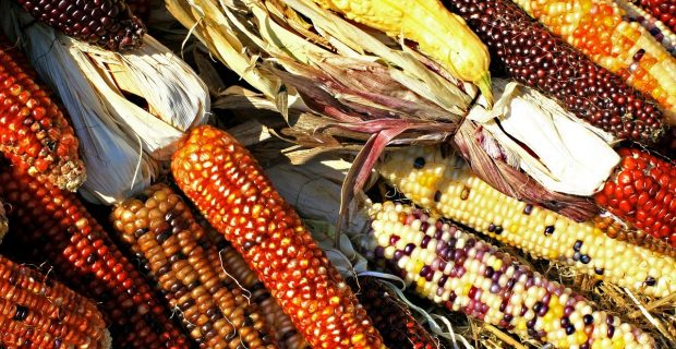 ¿Qué tanto sabes sobre el maíz?