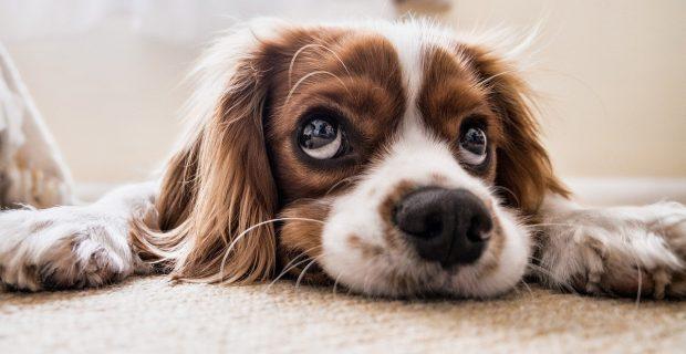 10 estatutos caninos
