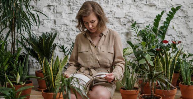 ¿Cuáles son los beneficios de tener plantas en casa?